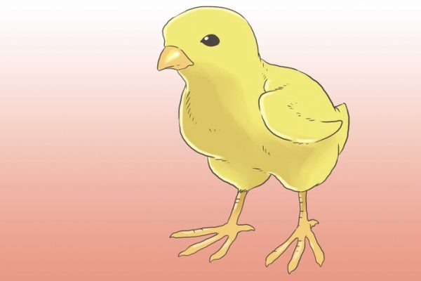 728px-Raise-Chickens-for-Eggs-Step-9-Version-2